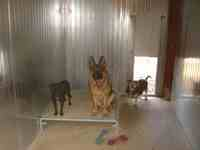 Box chiens pension garde animaux Metz Moselle