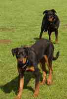 Chiens pension canine Thionville Moselle